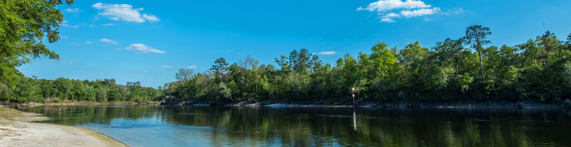 Suwannee river shoreline during day