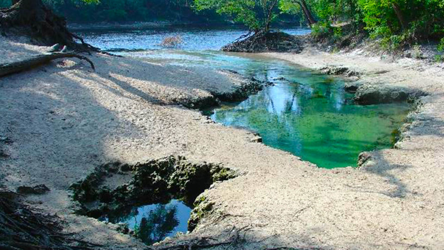 nature landscape with blue water at telford springs in live oak florida